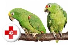 Витамины и подкормки для птиц