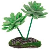 Растение террариумное Граптоверия REP15010