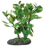 Растение террариумное Крассула REP25003