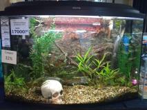 Оформленный аквариум 115л
