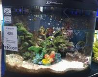 Оформленный аквариум море